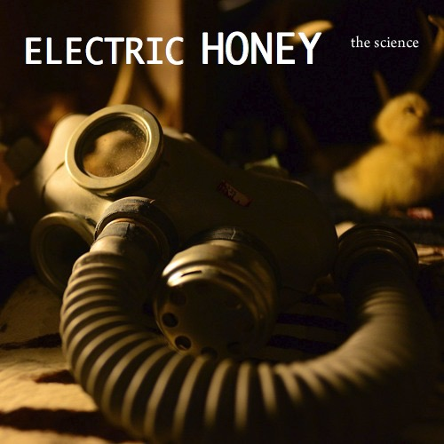 electrichoneyband